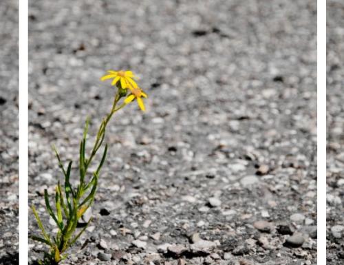 Strati d'asfalto di Maena Delrio